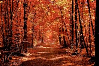 Forêt de Bû